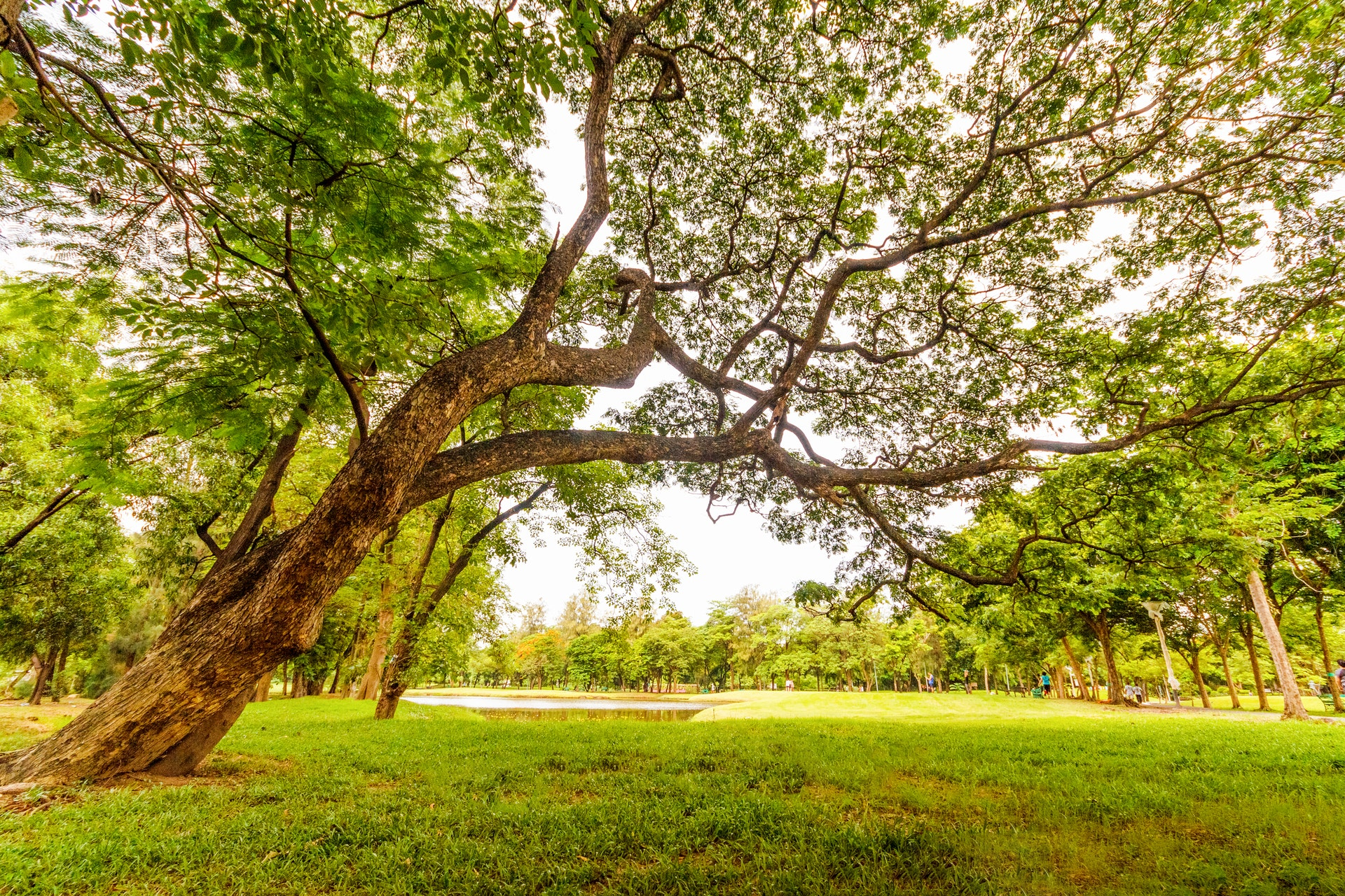 worm-s-eyeview-of-tall-tree-under-a-gray-sky-618608
